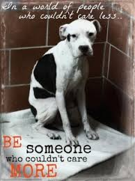 Animal Abuse Quotes And Sayings. QuotesGram