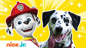 What Kind of <b>Dogs</b> & Birds Are The <b>PAW Patrol</b> & Top Wing ...
