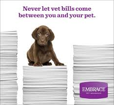get a free quote from embrace pet insurance