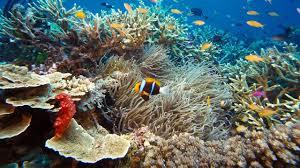 Real Underwater World If Real Underwater World I Nongzico