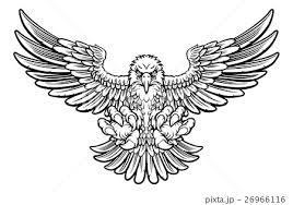 鳥 タカ 白バック イラストのイラスト素材 Pixta