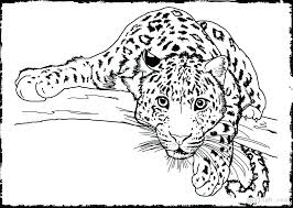 Free Printable Colouring Pages Zoo Animals Coloring Pages Zoo