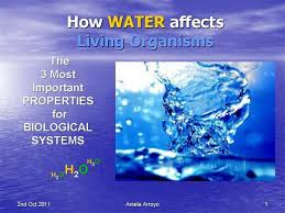 biology esl water importance to living organisms water importance to living organisms