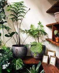 Beautiful The Best Trees (and Big Plants) To Grow In Your Living Room