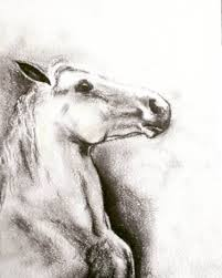 rearing horses drawings. Delighful Rearing Rearing Horse Drawings For Sale On Horses
