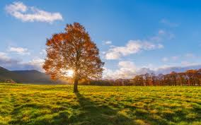 Autumn, fields, lonely tree, sun rays wallpaper   nature and landscape   Wallpaper Better