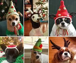 Crochet Dog Hat Pattern Delectable Crochet Dog Hat Pattern Ideas Best Collection Video Tutorial