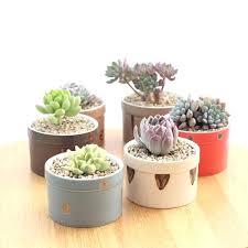 cactus planters set of 6 tranation glazed ceramic flowerpots succulent plant pots home decorative cactus planters