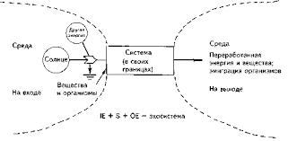 ris gif Таким образом в структуре и функциях экосистемы воплощены все виды активности всех организмов входящих в данное биологическое сообщество