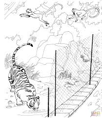 zoo cage coloring page. Beautiful Coloring Tiger And Rhesus Macaques In A Zoo And Cage Coloring Page I