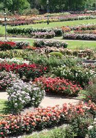 highlights of the tyler rose garden