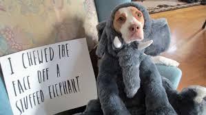 Despite online 'dogshaming' memes, experts say pooches don't feel ... via Relatably.com