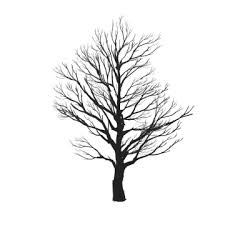 Tree Silhouette Png Images Vector And Psd Files Free Download On