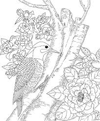 Detailed Bird Coloring Pages At Getdrawingscom Free For Personal