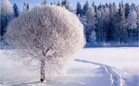 winter-pics-14.jpg