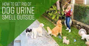 dog urine smell outside
