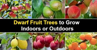 dwarf fruit trees to grow indoors or