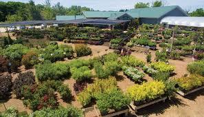 locally grown trees cedarburg garden center johnson s gardens trees