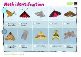 Moth Identification Chart Moth Identification The Wildlife Trusts