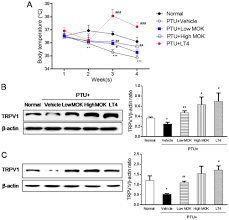 effect of mok pharmacopuncture on the changes in body rature and the expression of trpv1 protein in ptu induced hypothyroidism rats