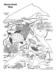 food chain coloring sheets acoloringsheets color online food chain coloring sheets free printable coloring page for kids on food web worksheet pdf