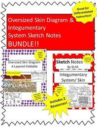 Skin Diagram Foldable Sketch Notes Bundle Great For