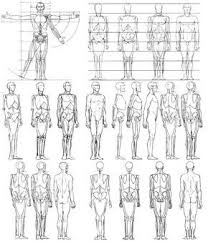 Human Proportions Chart Body Proportions Reference Chart In 2019 Anatomy Drawing