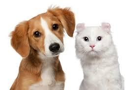 Διαφορές μεταξύ σκύλου-γάτας...