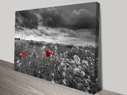 red poppy field black and white canvas art
