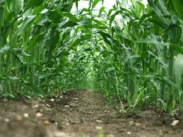How to Start farming Business in Nigeria