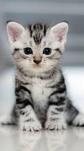 Cat Wallpapers for Mobile Phone Free ...