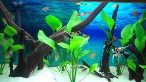 Aquarium Backgrounds Clearview Aquarium Background Enhancer Wmv Youtube