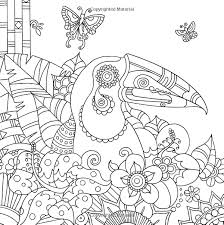 Small Picture toucan bird tropical wildlife Coloring pages colouring adult
