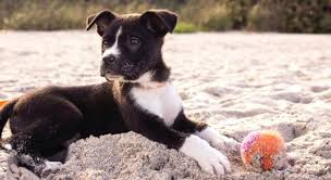 dog paw moisturizer for paws balm coconut oil