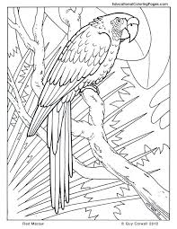 Small Picture macaw coloring page macaw coloring page free download Syougitcom