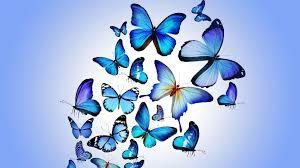 Butterfly Wallpaper Laptop Blue ...
