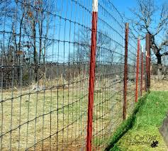 2x4 welded wire fence. Simple Wire Goat Fencing That Works Oak Hill Homestead Rh Oakhillhomestead Com Welded  Wire Fence Panels Welded Wire On 2x4 E