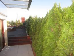 Attico in città paesaggi garden vivaiopaesaggi garden vivaio