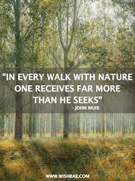 Best Nature Quotes Magnificent 48 Best Nature Quotes Slogans With Images Quotes Pinterest