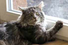 why hyperthyroidism in cats is such a