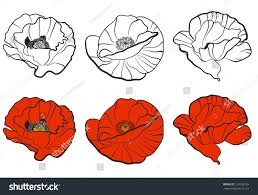 poppy template royalty free stock illustration of three different bud poppy