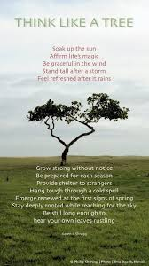 Tree Of Life Quote Adorable Download Tree Of Life Quote Ryancowan Quotes