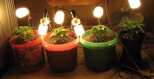 The Best Lights To Use To Grow Weed Herban Planet