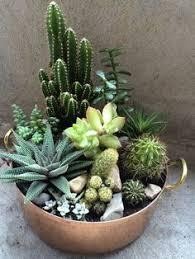 Cactus Bowl Seating Chart 24 Best Cactus Succulent Bowl Images Cactus Planting