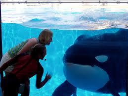 tilikum attack footage dawn. Perfect Footage Shamu Attack Kill Six Flags San Antonio Sea World Killer Whale Kills  Trainer Video Of See  To Tilikum Attack Footage Dawn