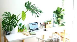 best office plants no sunlight. Best Desk Plants Great Cubicle Office Good View Details Buy For No Sunlight