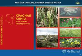Презентация на тему Экологическая безопасность Экологическая  11 11 КРАСНАЯ КНИГА РЕСПУБЛИКИ БАШКОРТОСТАН