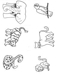 Coloriage Animaux Jungle Imprimer Dessincoloriage