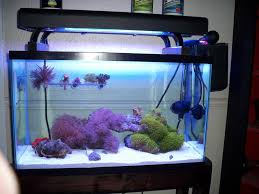 More recent pic of my frag tank I use to QT: