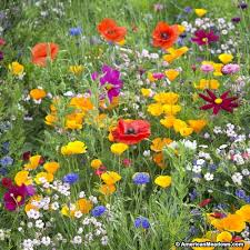 west wildflower seed mix